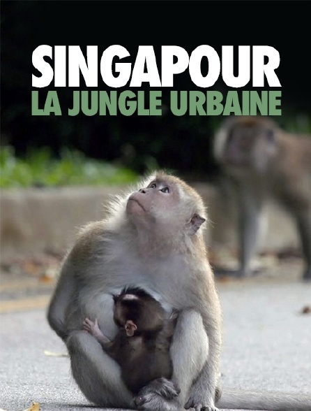 Singapour : La jungle urbaine