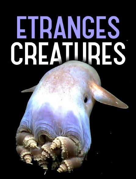 Etranges créatures