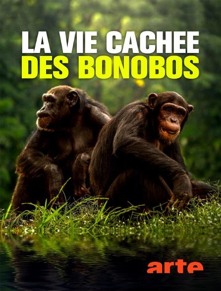 Arte - La vie cachée des bonobos