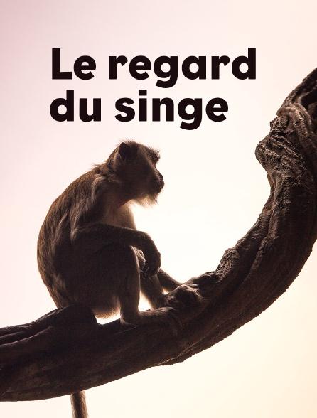 Le regard du singe