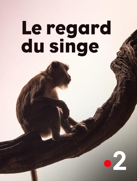 France 2 - Le regard du singe