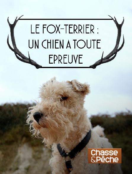 Chasse et pêche - Le fox-terrier : un chien à toute épreuve