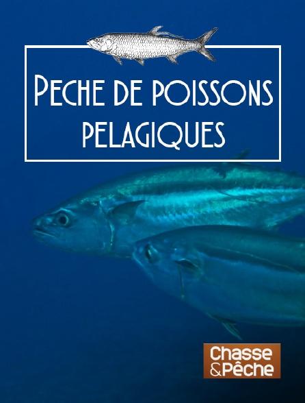 Chasse et pêche - Pêche de poissons pélagiques