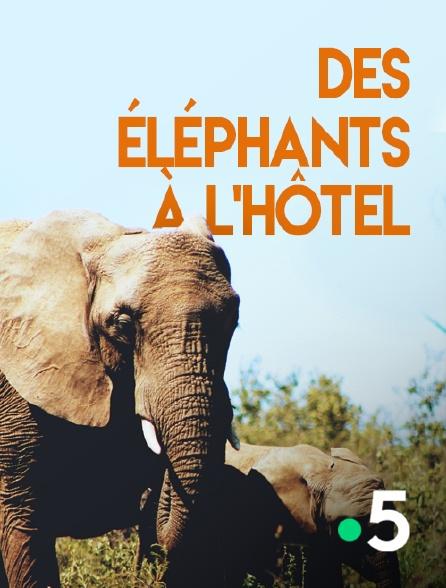 France 5 - Des éléphants à l'hôtel