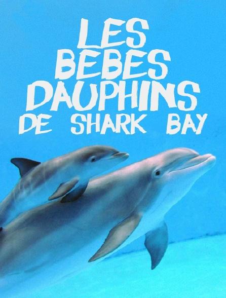 Les bébés dauphins de Shark Bay