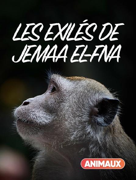 Animaux - Les exilés de Jemaa el-Fna