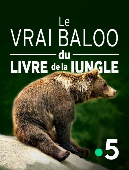 """France 5 - Le vrai Baloo du """"Livre de la jungle"""""""