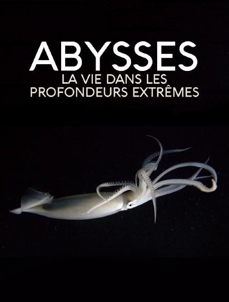 Abysses, la vie dans les profondeurs extrêmes