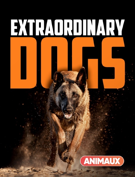 Animaux - Des chiens extraordinaires