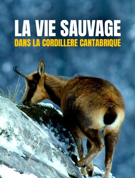 La vie sauvage dans la cordillère Cantabrique