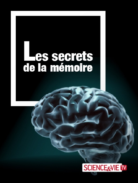 Science et Vie TV - Les secrets de la mémoire