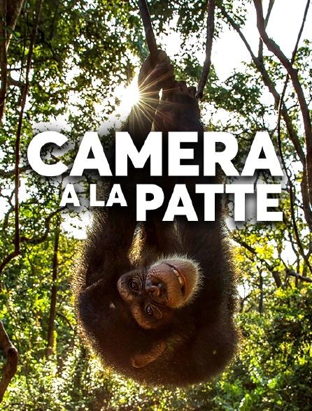 Caméra à la patte