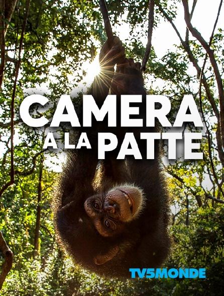 TV5MONDE - Caméra à la patte