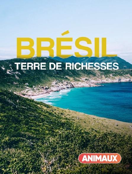 Animaux - Brésil : Terre de Richesses