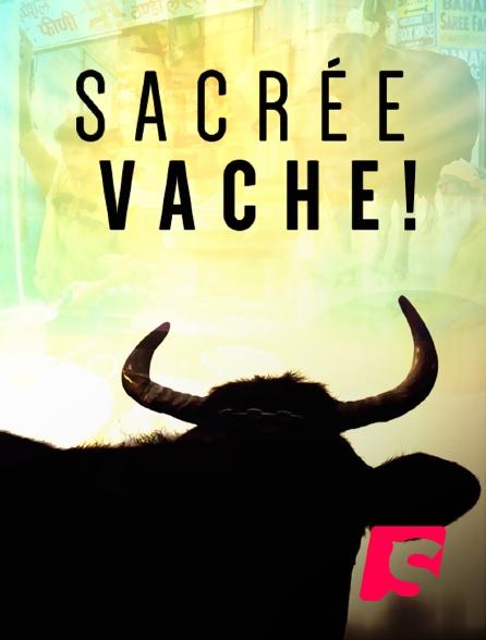 Spicee - Sacrée vache !