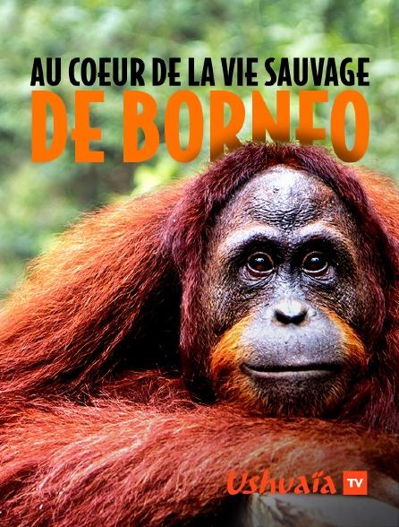 Ushuaïa TV - Au coeur de la vie sauvage de Bornéo