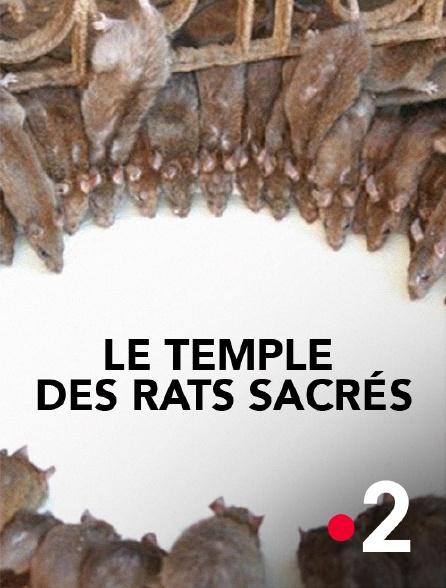 France 2 - Le temple des rats sacrés