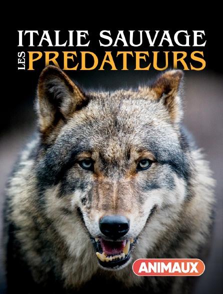 Animaux - Italie sauvage : les prédateurs