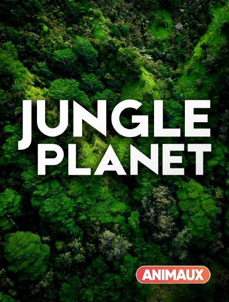 Animaux - Jungle Planet