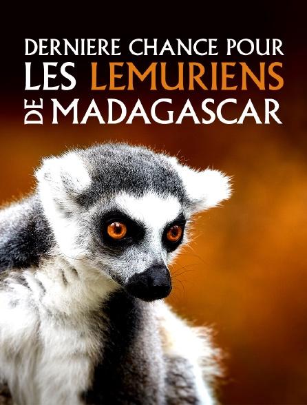 Dernière chance pour les lémuriens de Madagascar