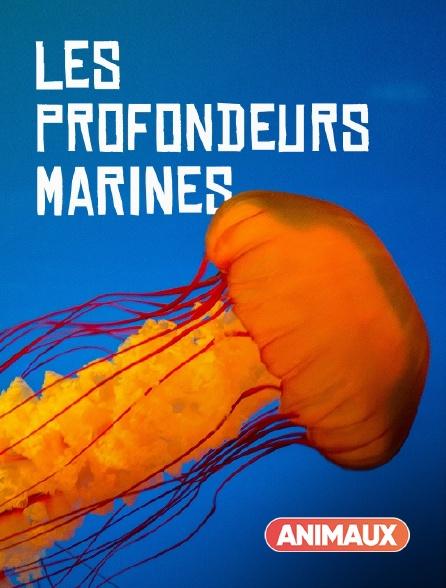 Animaux - Les profondeurs marines