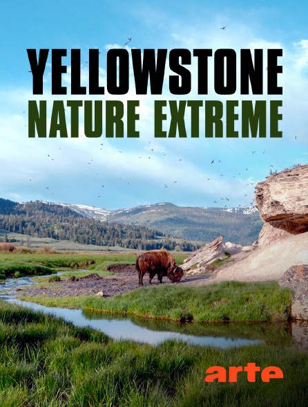 Arte - Yellowstone - Nature extrême