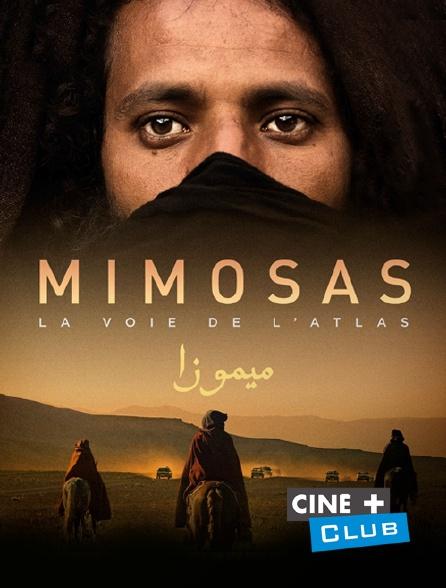 Ciné+ Club - Mimosas, la voie de l'Atlas