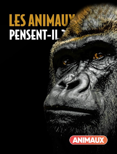 Animaux - Les animaux pensent-ils ?