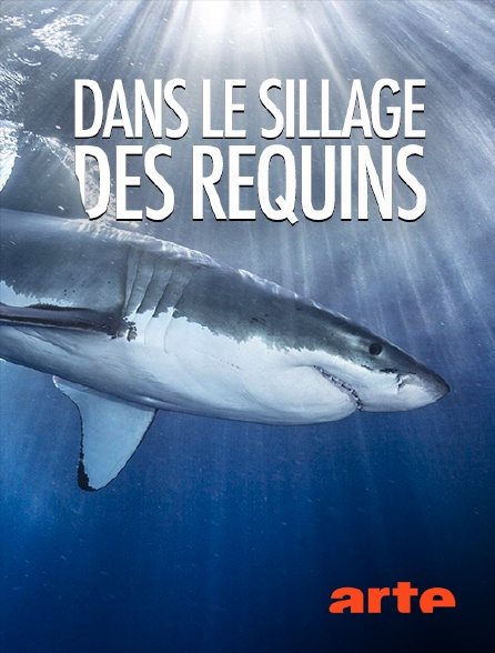 Arte - Dans le sillage des requins