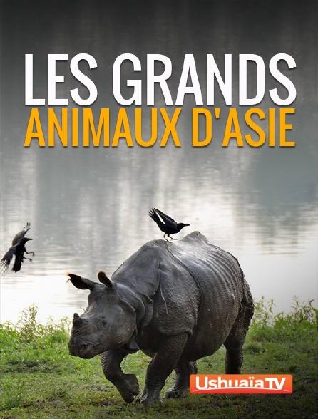 Ushuaïa TV - Les grands animaux d'Asie