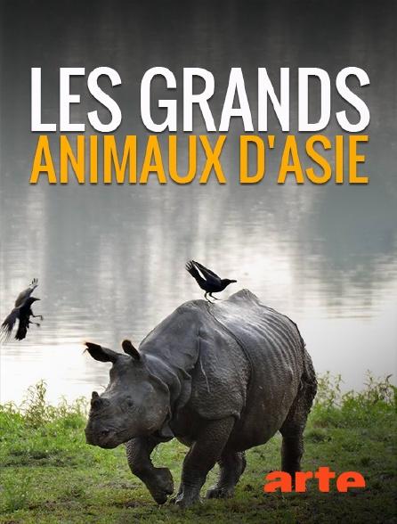 Arte - Les grands animaux d'Asie