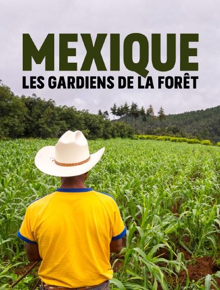 Mexique, les gardiens de la forêt