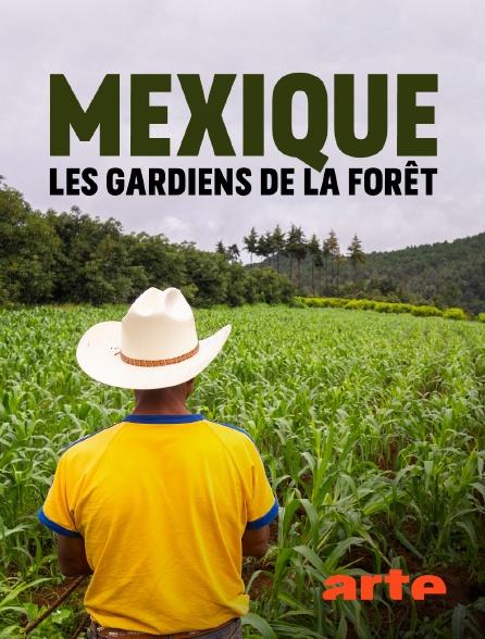 Arte - Mexique, les gardiens de la forêt