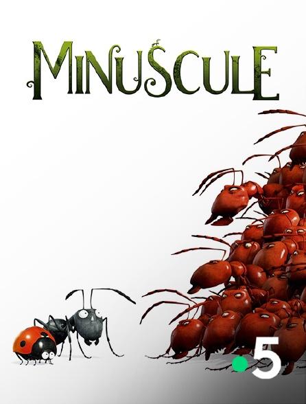 France 5 - Minuscule