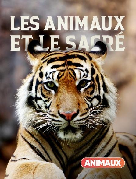 Animaux - Les animaux et le sacré