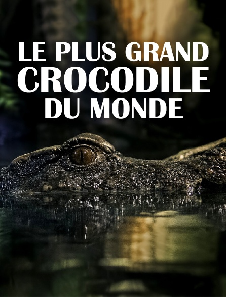 Le plus grand crocodile du monde