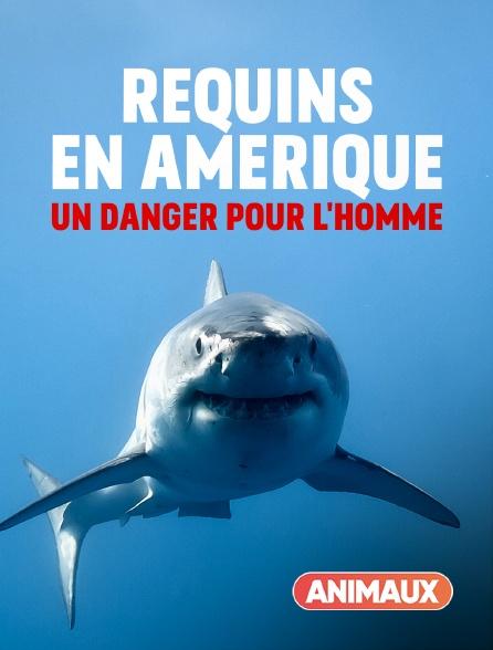 Animaux - Requins en Amérique : un danger pour l'homme