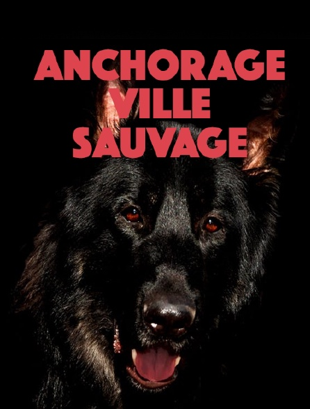 Anchorage, ville sauvage