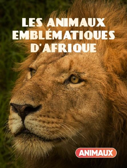 Animaux - Les animaux emblématiques d'Afrique en replay