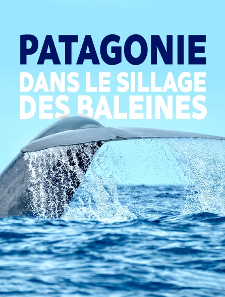 Patagonie, dans le sillage des baleines