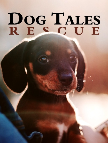 Dog Tales Rescue