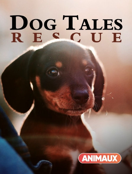 Animaux - Dog Tales Rescue
