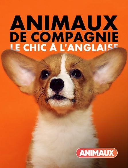 Animaux - Animaux de compagnie : Le chic à l'anglaise