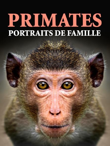 Primates, portraits de famille