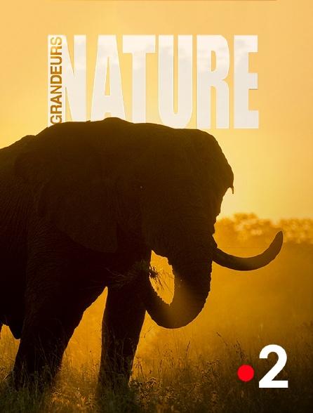 France 2 - Grandeurs nature