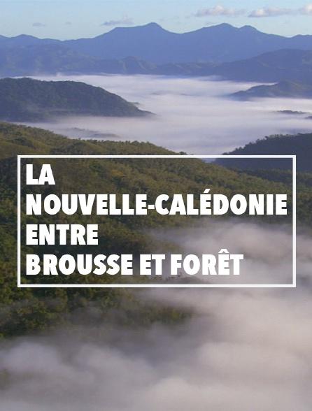 La Nouvelle-Calédonie, entre brousse et forêt