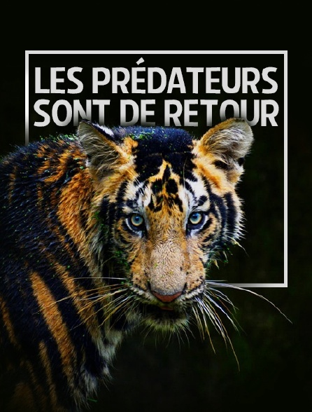 Les prédateurs sont de retour