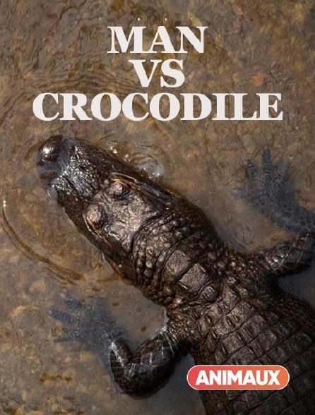 Animaux - Man vs Crocodile