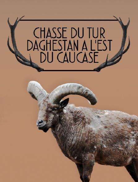 Chasse du tur Daghestan à l'Est du Caucase