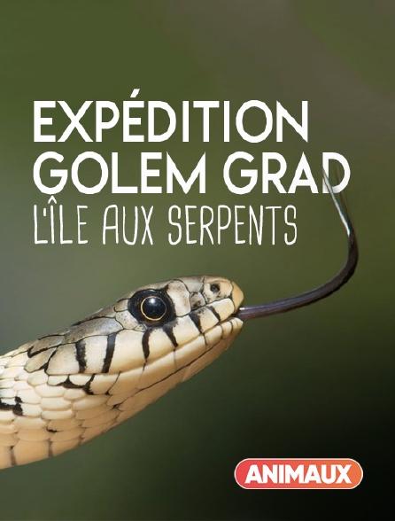 Animaux - Expédition Golem Grad, l'île aux serpents